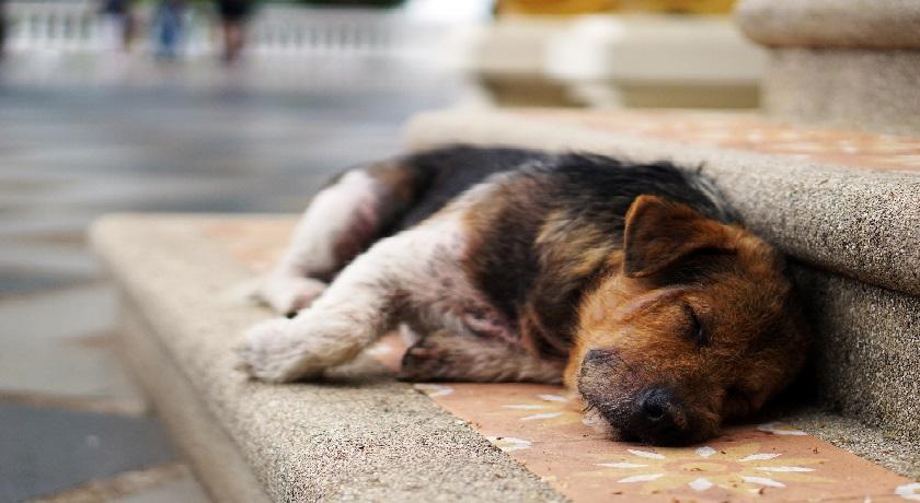A dog credit lauren kay